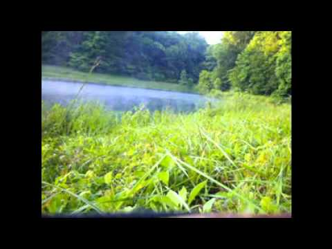 Farm pond Bass fishing in Williamsport,TN