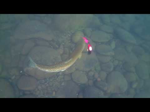 Water Wolf – Fishing For Steelhead Underwater Footage