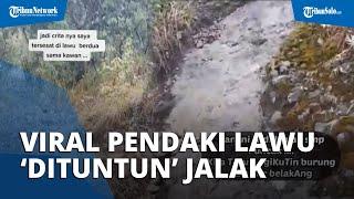 Viral Video Pendaki Tersesat di Gunung Lawu 'Dituntun' Seekor Burung Jalak, Begini Kata Relawan