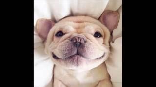 Вы видели как улыбаются животные?