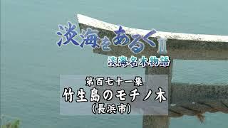 淡海をあるく 竹生島のモチノ木 長浜市