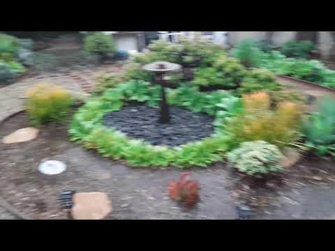 An Update on the Backyard Ecological Landscape: November, 2018