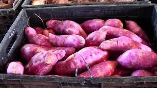 Ceasa registra redução no preço de verduras em Patos de Minas