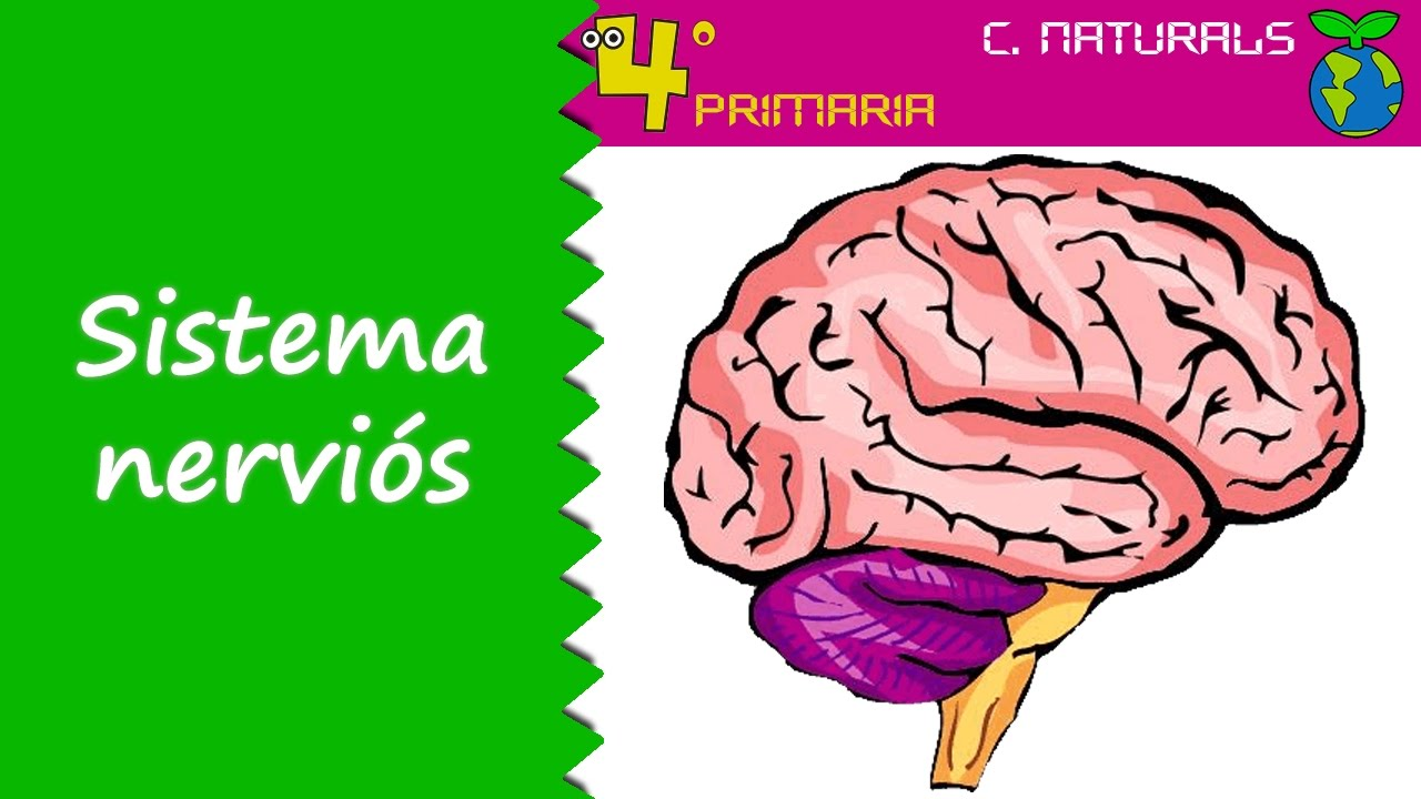 Ciències de la Naturalesa. 4t Primària. Tema 1. Funció de relació. El sistema nerviós