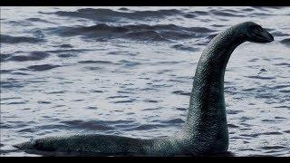 Невероятные свидетельства очевидцев неизвестных животных. Что скрывают морские глубины?