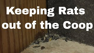 Rodent Control in the Coop