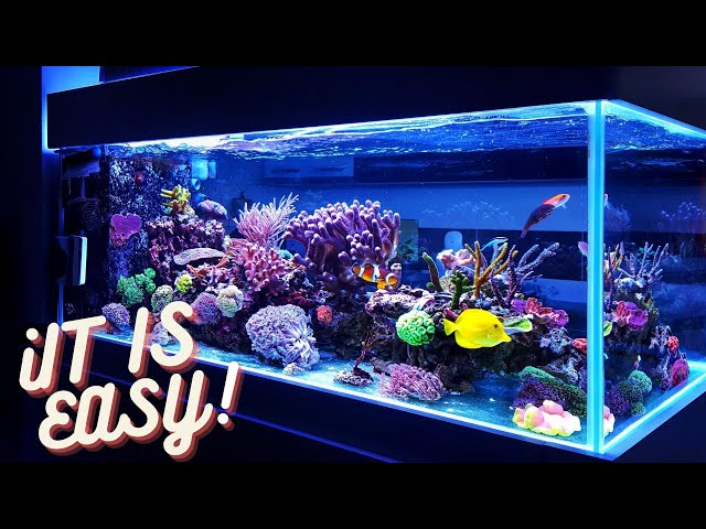 How To Get Crystal Clear Water In Your Tank.