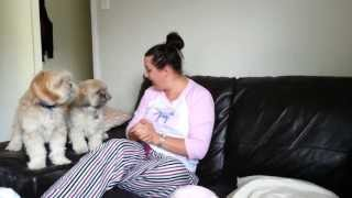Lhasa Apso Dogs Go Crazy When You Ask Them If Theyre Hungry!