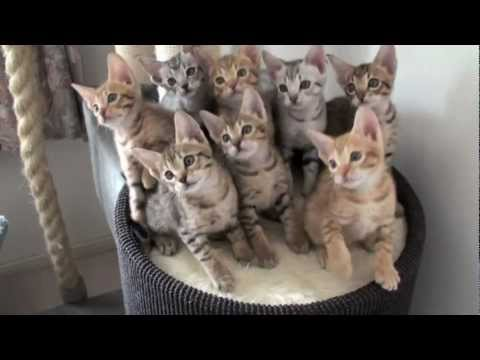 Funny Cats ECards Those Kittens got hypnotized amazing training..