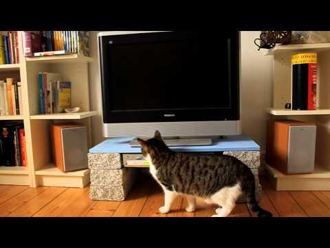 Katze spielt mit DvD-Player