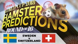 World Cup 2018 Hamster 'Predictions' Round Of 16: Sweden V Switzerland
