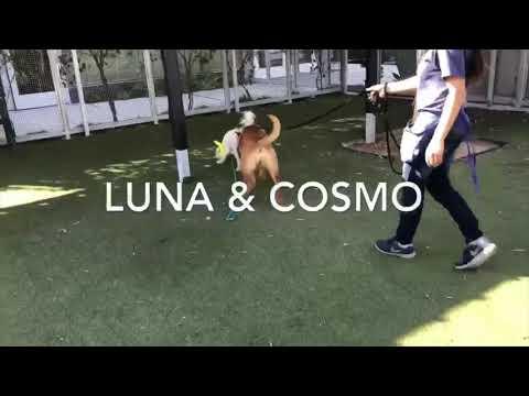 Luna, an adoptable German Shepherd Dog Mix in Pasadena, CA