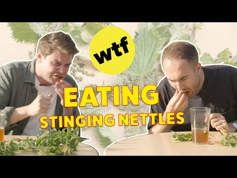 We Ate Stinging Nettles For 1 Hour • WTF Britain