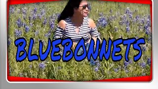 Bluebonnets in Texas | Texas State Flower
