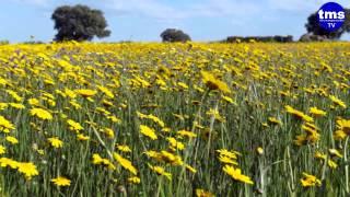 preview picture of video 'Laguna Grande.'