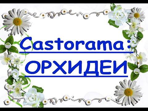 """ПОТРЯСАЮЩИЙ завоз ОРХИДЕЙ в""""Castorama"""",06.08.20.Оговариваюсь:Фронтеры называю Клеопатрами,и наоборот"""