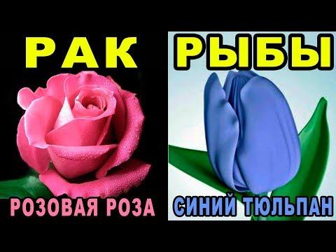Какой Ты Цветок по Знаку Зодиака? Цветочный Гороскоп по Дате Рождения | Цветы на 8 Марта 🌸
