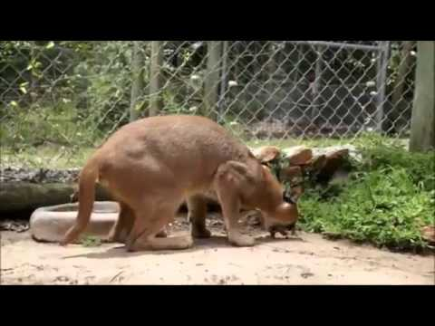 Animals Puking To Death Metal