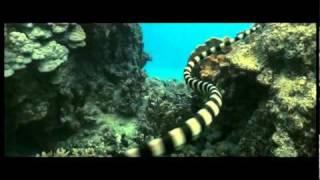 Океаны - трейлер (русские субтитры)