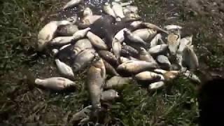 Рыбалка посёлок северный истринский район