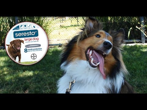 3-PACK Seresto Flea & Tick Collar for Large Dogs + Tapeworm Dewormer for Dogs (5 Tablets) Video