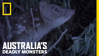 A Tiger with Spots?   Australia's Deadly Monsters