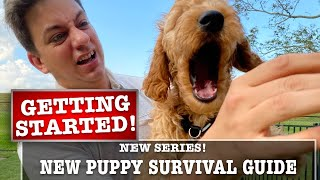 NEW PUPPY SURVIVAL GUIDE: Getting Began! Biting, Potty Coaching & Extra!