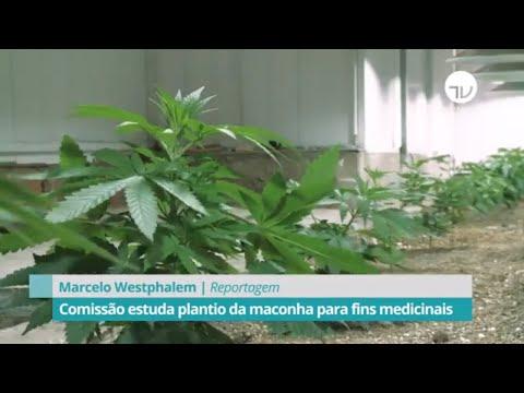 Cannabis: comissão estuda plantio da maconha para fins medicinais - 20/02/20