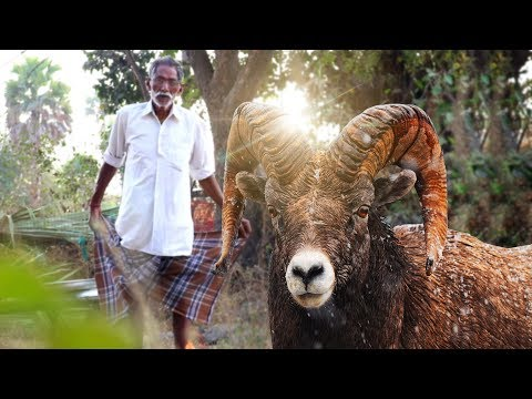 Goat Biryani | Traditional Keema Biryani | Lamb Biryani Recipe By our Grandpa | Grandpa Kitchen