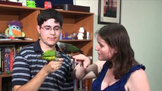 How To Socialize Parrot