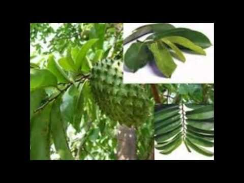 Video Obat Penyakit Jantung Herbal