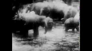 Beyond Bengal (1934) JUNGLE ADVENTURE