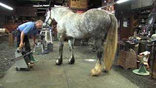 Shoeing A Draft Horse - Tips And Techniques Part 2 (Rear Hoof Trimming)