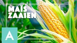 Maïs Zaaien! - Grow, Cook, Eat #30