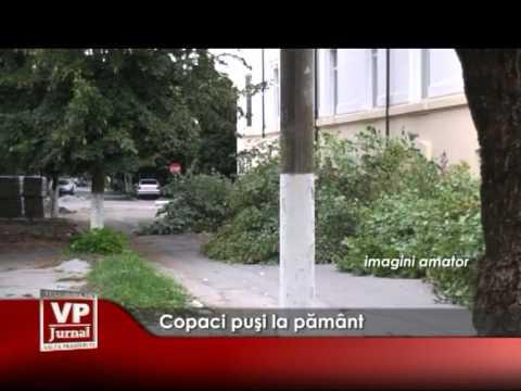 Copaci puşi la pământ
