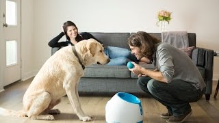 5 Cool Gadgets for Your Puppy | #1