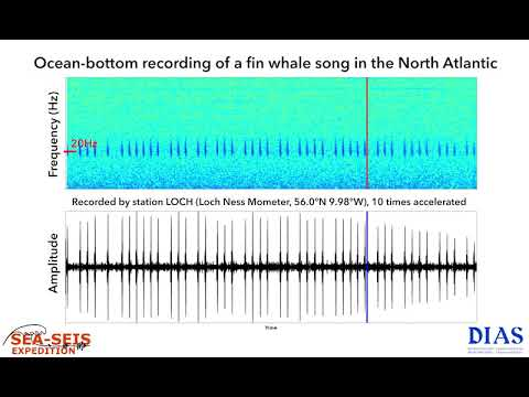 Scientists Could Use Whale Songs to Map Ocean Floor