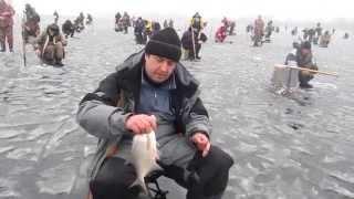 Ловля на мормышку зимой густеры