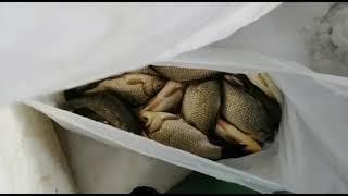 Рыбалка зимняя в омской области