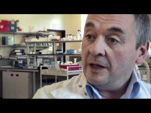 Antibiotika mit Entzündung diabetischen Wunden