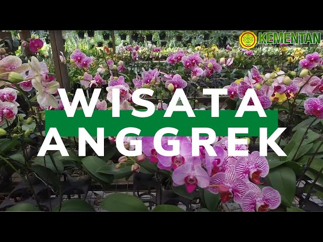 Cantiknya Anggrek di Kawasan Ragunan – Vlog!
