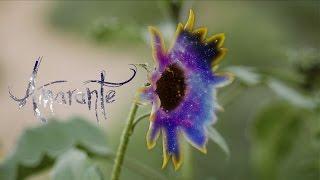 Amarante   Awakening