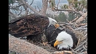 3-11-19  Big Bear Eagles-  Persistence Pays Off!