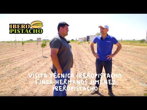 Visita Técnica IberoPistacho - Finca Hermanos Jiménez -IberoPistacho