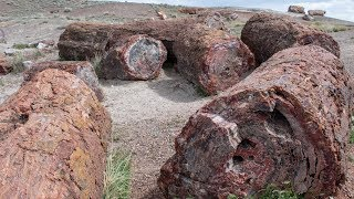 How To Visit Petrified Forest National Park