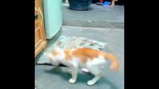 Kucingku Si Kachong Maen petak umpet.MP4