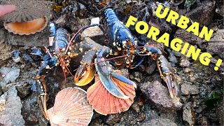URBAN FORAGING / Grilled Lobster and Scallop ! Huge lobster, Oysters, Scallops and More !
