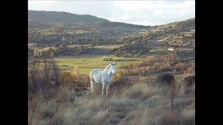 Video del alojamiento Alojamientos rurales Piedrahita-Barco-Gredos