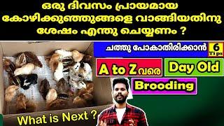 കോഴി കുഞ്ഞുങ്ങളെ വാങ്ങി വളർത്തുമ്പോൾ ശ്രദ്ധിക്കേണ്ട കാര്യങ്ങൾ How to raise day old chicks Malayalam