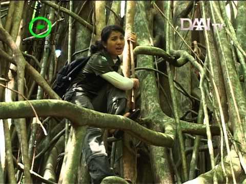 Widi Dwinanda - Memori Sahabat Alam DAAI TV (Episode 3 Ujung Kulon)